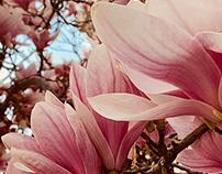 Bloomin Spring 2