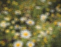 Blurred Lens, Flowers - San Francisco 2017