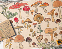 Watercolor mushrooms collection.