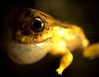 baby frog sculpt