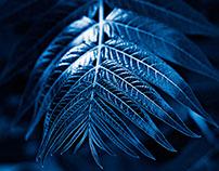 Cyanotype Photography [pt.26]