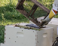 Adopt a Honeybee Hive Program
