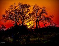 Sunsets - Okavango Delta- Botswana