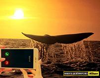 Gráfica - Nikon