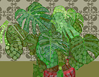 Philodendron 2