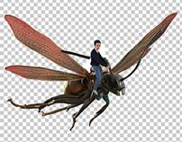 Ant Man//