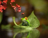 Frog and Ladybug - The Journey Began
