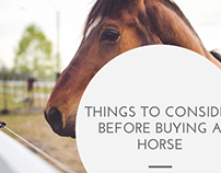 Things to Consider Before Buying a Horse