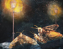 The Moth and the Star