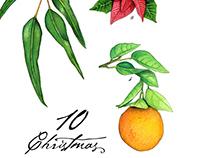 10 Christmas Plants and Fruits