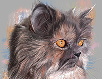 Cats Portraits
