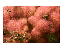 Eric Copeman - Botanical