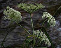 tra l'erba (II)