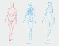 Human Form Study