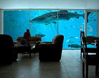 Aquarium in living room