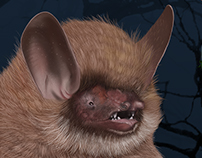 Digital Painting Animal Illustration: Wooly-Headed Bat
