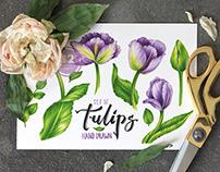 Hand Drawn Tulip Set