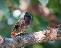 Bird Photography From My Window