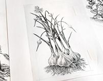 Tierra Farms Sketches