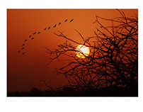 Photography Exhibition 2014 | Ujjain