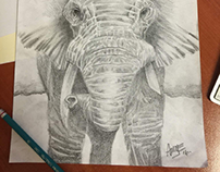 Bocetando elefantes.