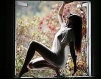 wind in the window