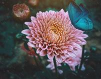 """""""Flower & Butterfly"""""""
