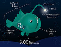 Facts on the Anglerfish