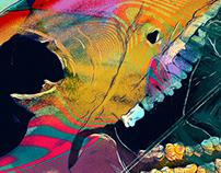 Illustrations for Ozora Festival 2020