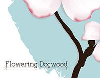 Cornus florida -- Flowering Dogwood