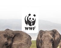 WWF España - Ganadores Versus CdeC