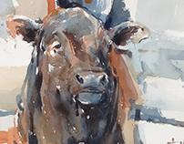 Dubbo Bull
