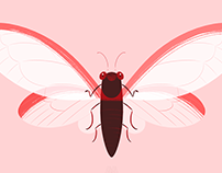 Red Winged Cicada