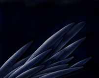 Vole de nuit