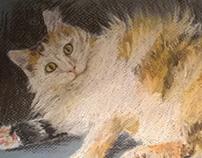 Murka the cat, pastels