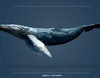 Ilustração | Whale