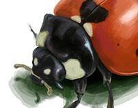 Ladybug Photoshop Practice