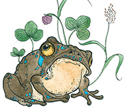 Finch and Frog