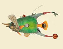 Infertile fishes: Deania Taeniopterus (collage)