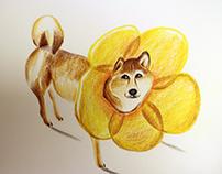 shiba illustration