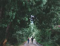 Bosque de pinos con amigos.
