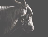 Brahman Cow: Adobe Sketch