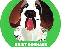 032 | Saint Bernard