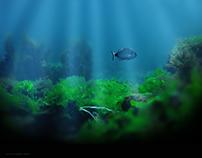 my underwater photos