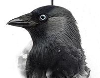 No Bird Sang - Art Posters