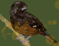 Bird#2
