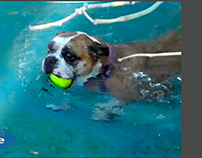 On the move dog in pool/ After Effects