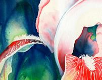 Tropical Iris