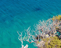 Greek Seashore and Shark Aggregation