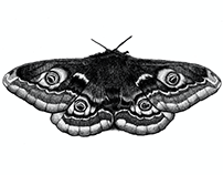 Insects Part One : Furtherstill
